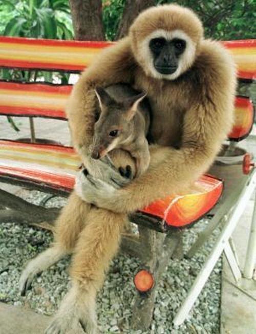 monkey-kangaroo-pup